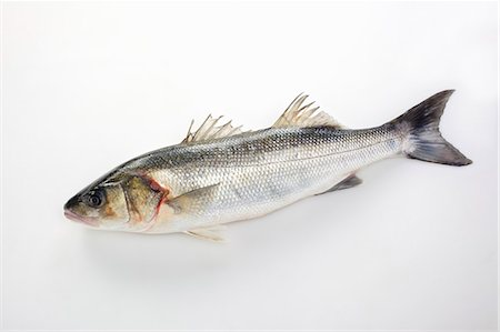 Temperate bass on a white surface Stock Photo - Premium Royalty-Free, Code: 659-07069568