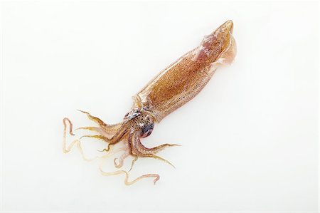 Squid on a white surface Stock Photo - Premium Royalty-Free, Code: 659-07069560