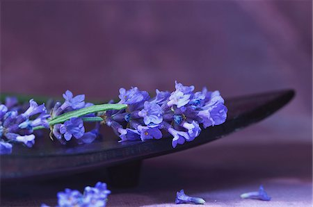 pharmaceutical plant - Lavender in a wooden bowl Stock Photo - Premium Royalty-Free, Code: 659-07598002