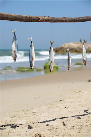 Fish hanging from a stick at the beach Stock Photo - Premium Royalty-Free, Code: 659-07598350