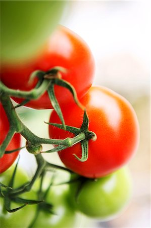 Right and unripe vine tomatoes (close-up) Stock Photo - Premium Royalty-Free, Code: 659-07610202