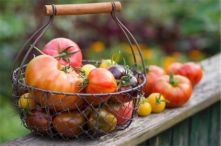 summer - A colourful harvest of tomatoes in a garden Stock Photo - Premium Royalty-Free, Code: 659-07959388