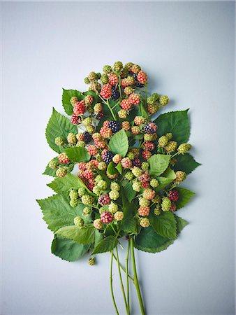 Sprigs of ripe and unripe wild blackberries Stock Photo - Premium Royalty-Free, Code: 659-08419562