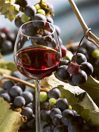 A glass of red wine with grapes in the background Stock Photo - Premium Royalty-Free, Code: 659-01854258