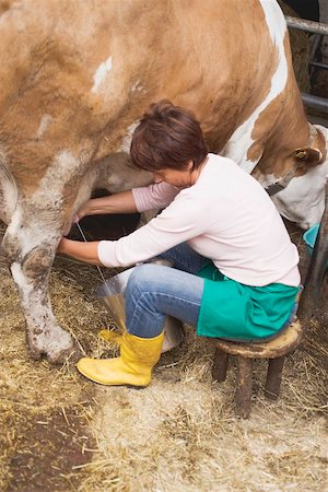 Cow being milked Stock Photo - Premium Royalty-Free, Code: 659-01866150