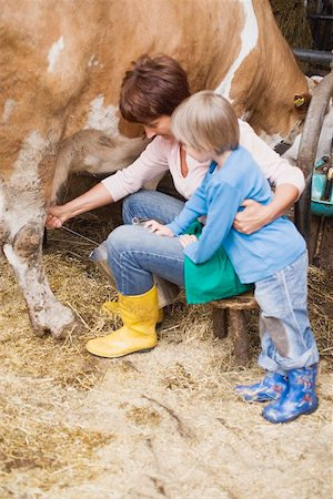 Cow being milked Stock Photo - Premium Royalty-Free, Code: 659-01866151