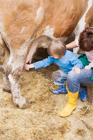 Cow being milked Stock Photo - Premium Royalty-Free, Code: 659-01866152