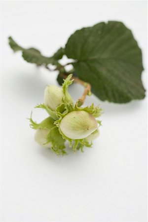 Unripe hazelnuts with twig and leaf Stock Photo - Premium Royalty-Free, Code: 659-02213084
