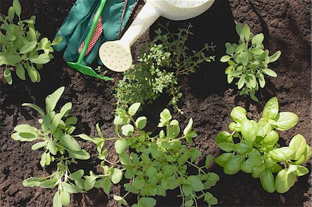 A herb garden (detail) Stock Photo - Premium Royalty-Free, Code: 659-03523445