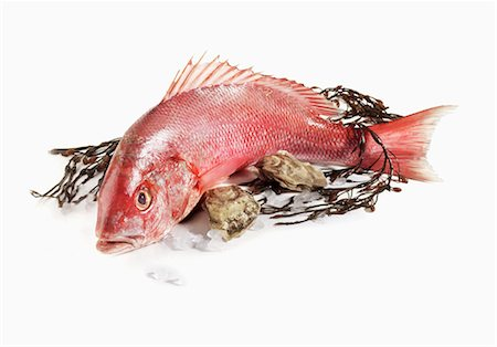 Whole Red Snapper with Seaweed and Oysters Stock Photo - Premium Royalty-Free, Code: 659-03535097