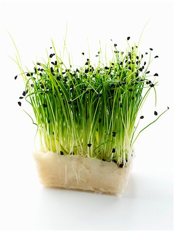 sprout - Chive sprouts Stock Photo - Premium Royalty-Free, Code: 659-03533703