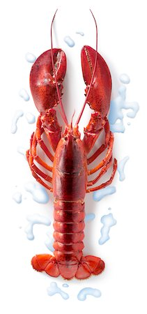 Cooked lobster Stock Photo - Premium Royalty-Free, Code: 652-05806991