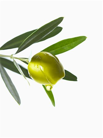 Olive and oil on an olive branch on a white background Stock Photo - Premium Royalty-Free, Code: 652-06819258