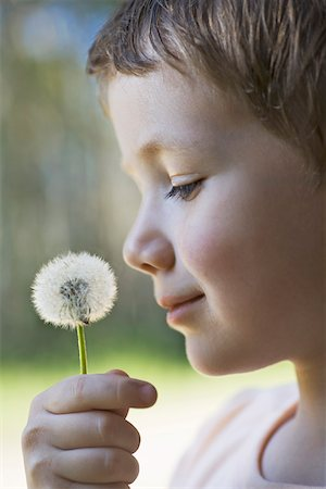 smelly - A boy holding a dandelion up to his nose Stock Photo - Premium Royalty-Free, Code: 653-05393244