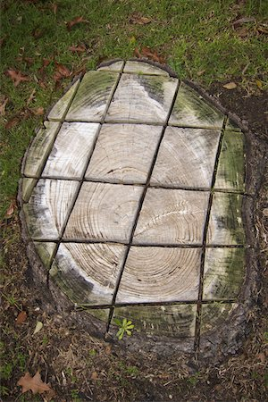 A grid pattern cut into a tree stump Stock Photo - Premium Royalty-Free, Code: 653-05393347