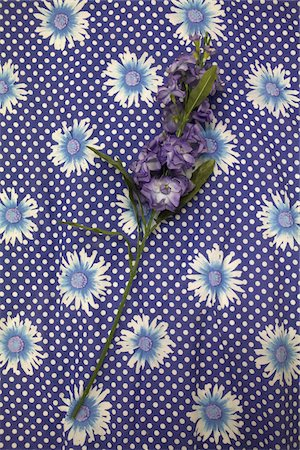 Purple flowers on floral fabric Stock Photo - Premium Royalty-Free, Code: 653-05975870