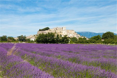 Lavender growing in the fields of Grignan, France Stock Photo - Premium Royalty-Free, Code: 653-05976337