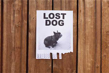 poster - A lost dog flyer posted on a wooden fence Stock Photo - Premium Royalty-Free, Code: 653-05976747