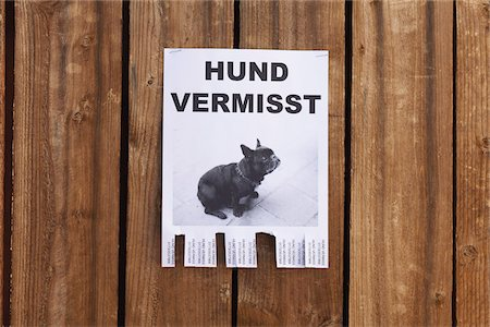poster - A lost dog in flyer in German posted on a wooden fence Stock Photo - Premium Royalty-Free, Code: 653-05976757