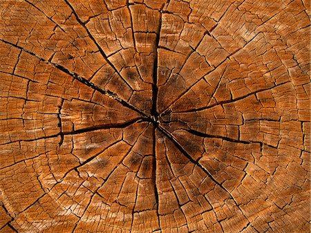 Cross section of tree Stock Photo - Premium Royalty-Free, Code: 653-06534222