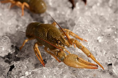 Lobster on ice Stock Photo - Premium Royalty-Free, Code: 653-06534306