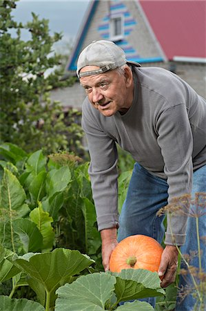 A senior man picking up a pumpkin from his garden Stock Photo - Premium Royalty-Free, Code: 653-06534681