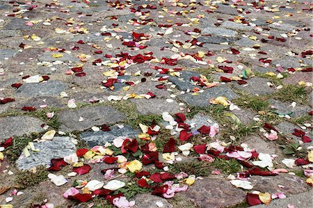Rose petals strewn on paving stones Stock Photo - Premium Royalty-Free, Code: 653-06535024