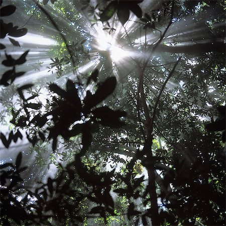 Sun shining through tropical tree canopy Stock Photo - Premium Royalty-Free, Code: 653-06535023