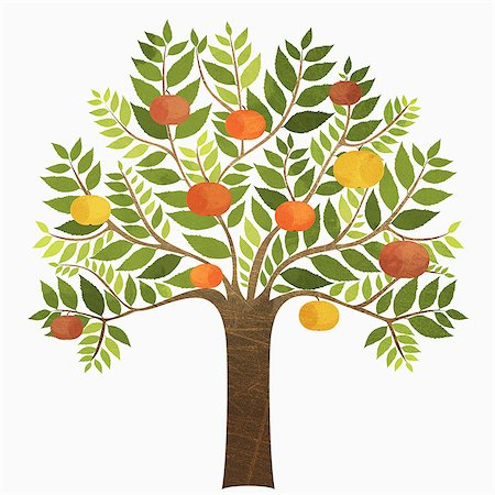 Some oranges growing on tree over white background Stock Photo - Premium Royalty-Free, Code: 653-07708108
