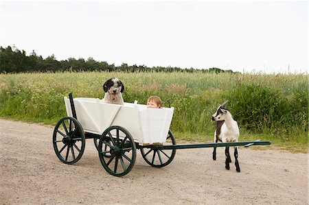 Baby girl and Portuguese Water Dog in cart, goat standing near field in countryside, near Wiendorf, Rostock District, Germany Stock Photo - Premium Royalty-Free, Code: 653-07761347