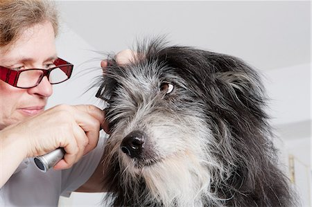 Female vet examining dog's ear in clinic Stock Photo - Premium Royalty-Free, Code: 653-08276781