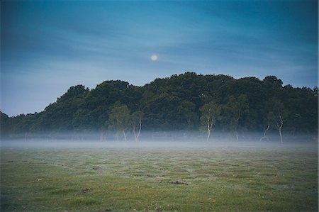 fog (weather) - Trees on field in foggy weather at dusk Stock Photo - Premium Royalty-Free, Code: 653-08382315