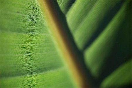 Full frame shot of leaf Stock Photo - Premium Royalty-Free, Code: 653-08382359