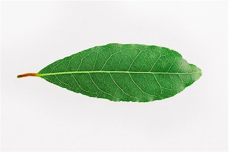 Close-up of herb on white background Stock Photo - Premium Royalty-Free, Code: 653-08382453