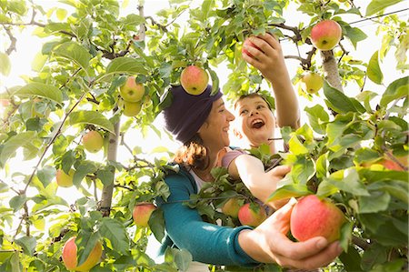 family apple orchard - Cheerful mother and son looking at each other while picking apples at orchard Stock Photo - Premium Royalty-Free, Code: 653-08382572