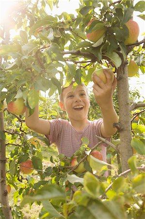 single fruits tree - Happy boy picking apple from tree Stock Photo - Premium Royalty-Free, Code: 653-08382585