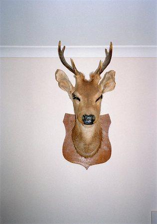 deer hunt - Mounted deer's head on wall Stock Photo - Premium Royalty-Free, Code: 653-01659850
