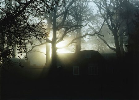 Sun shining through the trees behind a house Stock Photo - Premium Royalty-Free, Code: 653-01651978
