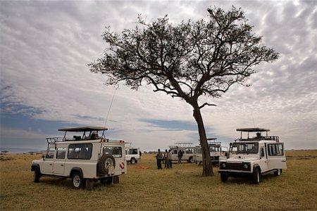 serengeti national park - Safari Vehicles Stock Photo - Premium Royalty-Free, Code: 653-01665110