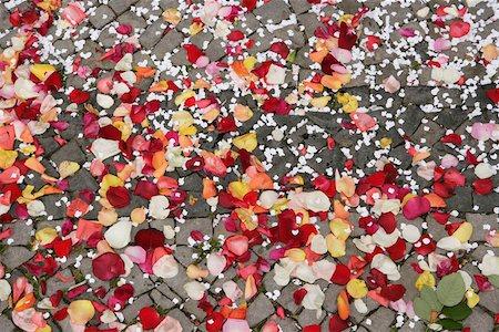 Rose petals on cobblestone pathway Stock Photo - Premium Royalty-Free, Code: 653-01660477