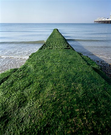 Breakwater covered with algae on Brighton Beach, England Stock Photo - Premium Royalty-Free, Code: 653-02001223