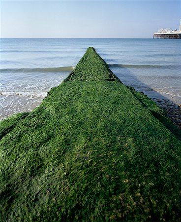 Breakwater covered with algae on Brighton Beach, England Stock Photo - Premium Royalty-Free, Code: 653-02001223