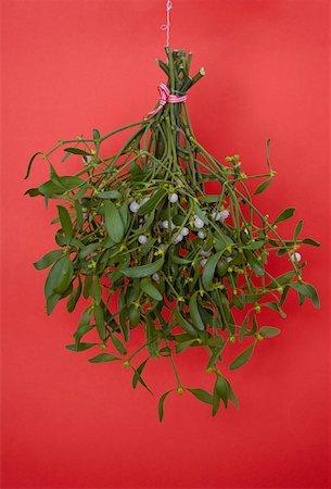 Hanging mistletoe Stock Photo - Premium Royalty-Free, Code: 653-02002209