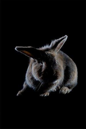 A Rabbit Stock Photo - Premium Royalty-Free, Code: 653-02078666