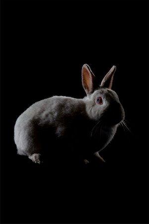 A Rabbit Stock Photo - Premium Royalty-Free, Code: 653-02078668