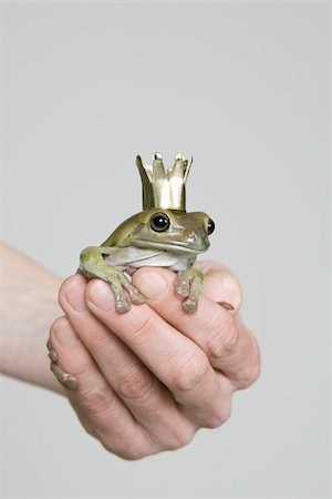 A frog wearing a crown, studio shot Stock Photo - Premium Royalty-Free, Code: 653-02835352