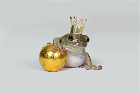 The frog prince and gold ball, studio shot Stock Photo - Premium Royalty-Free, Code: 653-02835391