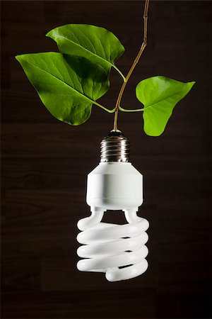 An energy saving light bulb hanging from a vine Stock Photo - Premium Royalty-Free, Code: 653-03079737