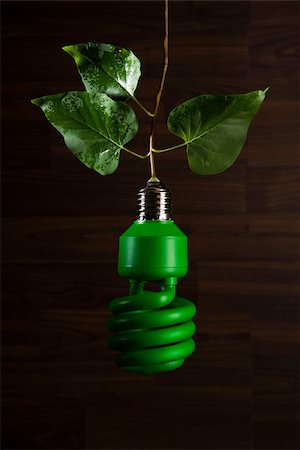 An energy saving light bulb painted green hanging from a vine Stock Photo - Premium Royalty-Free, Code: 653-03079749