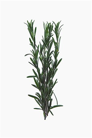 A sprig of organic rosemary on a lightbox Stock Photo - Premium Royalty-Free, Code: 653-03334528